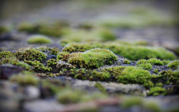 Как убрать мох с асфальта — Сайт про огород