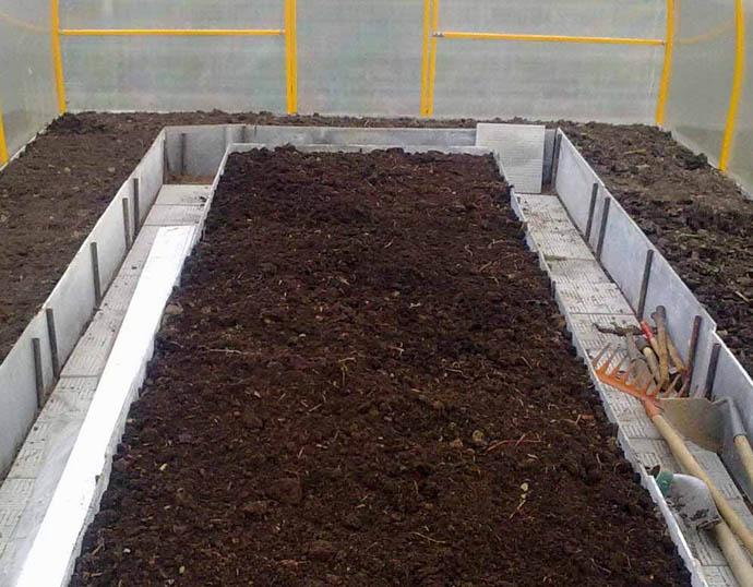 Чеснок лучше всего растет на супесчаных почвах и в черноземе