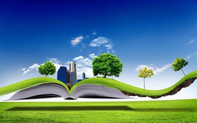 Красивый газон: виды и особенности выбора