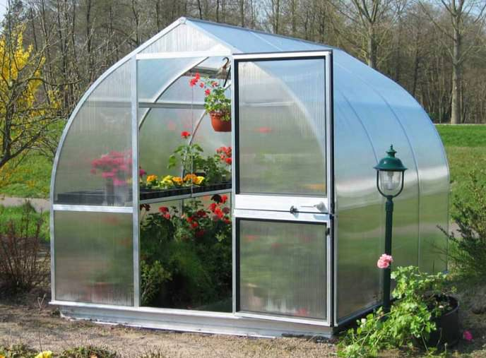 Улучшить состояние тепличных круглогодичных посадок позволяет подсев к основным овощным культурам декоративных растений