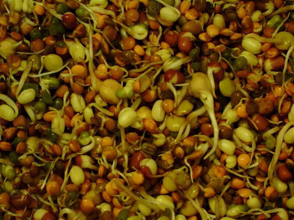 Для выращивания чечевицы на приусадебном участке достаточно правильно подобрать сорт
