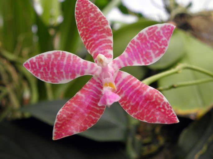 Ответы на часто задаваемые вопросы о цветении комнатной орхидеи