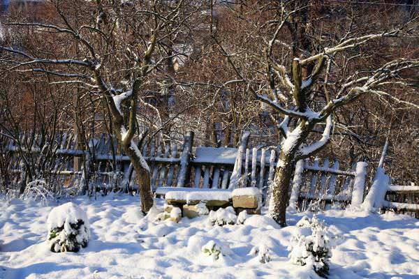 Важно своевременно провести работы по задержанию снега, стряхнуть с ветвей лишнее