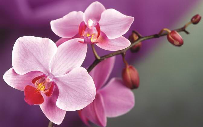 Основное правило подкормки комнатных растений: орхидею лучше недокормить, чем перекормить
