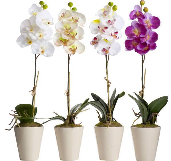 Для орхидеи необходим такой грунт, который способен удержать фаленопсис в вертикальном положении