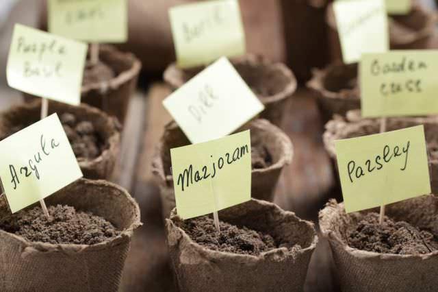 В феврале предстоит вести посев семян цветов и овощей на рассаду