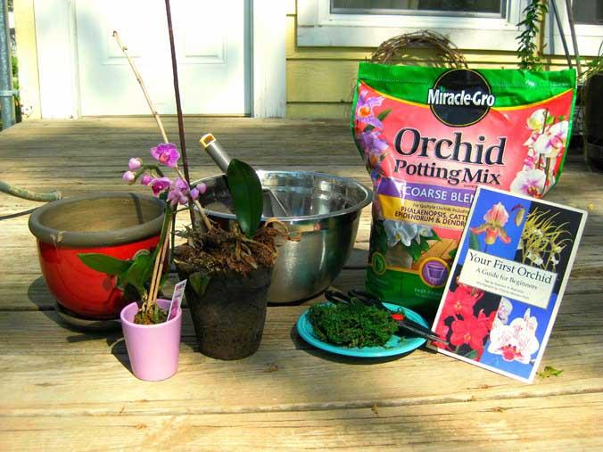 Следует не только подготовить весь необходимый инвентарь, но и ознакомиться с особенностями, характерными для размножения орхидей