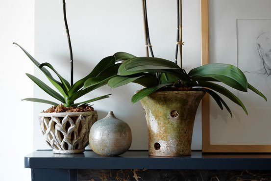 При выращивании в домашних условиях важно правильно выбрать емкость и субстрат для орхидеи