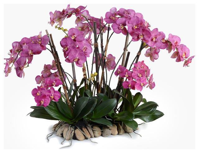 Хорошо цветут фаленопсисы, получившие избыточный полив