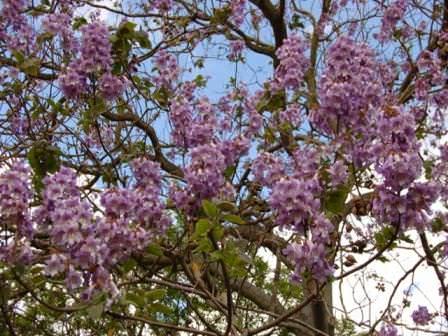 Мед из цветов Адамового дерева