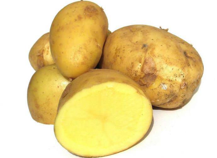 Клубни картофеля Агата имеют высокую товарность