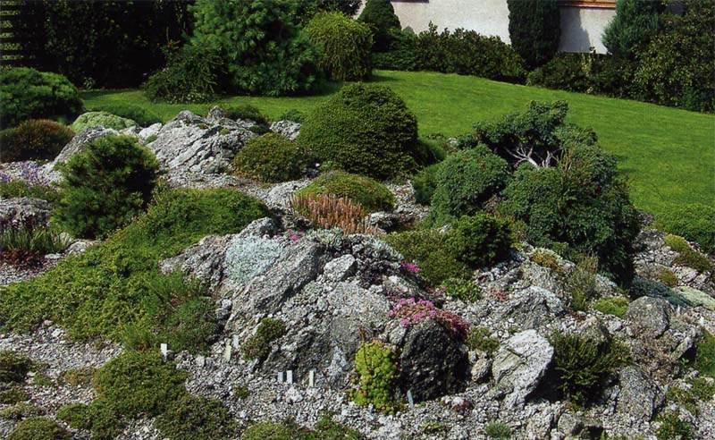 Правила по созданию альпинария на дачном участке