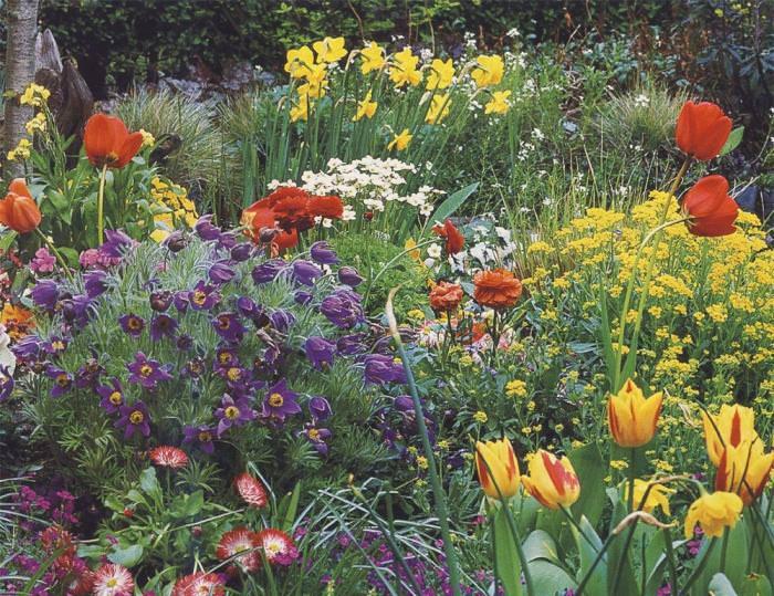 Оптимальные места для выращивания растения – клумба с невысокими многолетниками, альпийская горка, рокарий