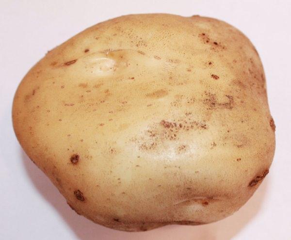Картофель «Тимо Ханккиян» имеет большое количество положительных характеристик