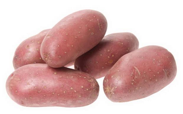 Товарность собранного урожая картофеля «Астерикс» достигает 71-91%