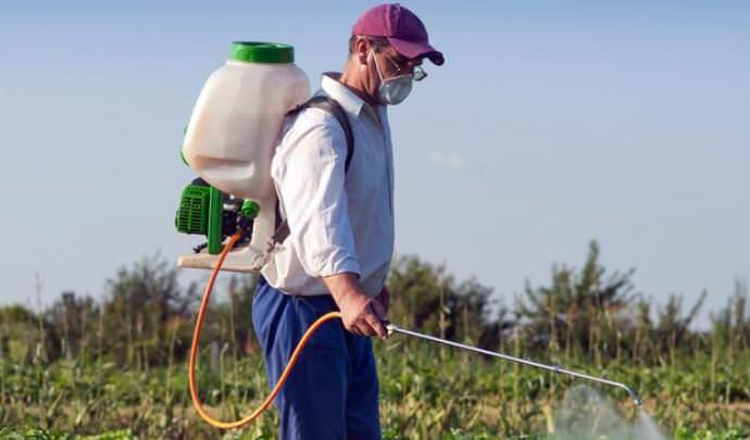Для защиты картофеля «Латона» от фитофтороза и альтернариоза необходимо использовать опрыскивание в период вегетации