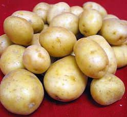 Картофель «Голубизна» – сорт российской селекции