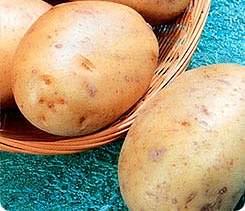 Картофель «Баллада» относится к среднеспелым сортам столового назначения
