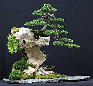 Бонсай – выращивание точной копии дерева, но только в миниатюре