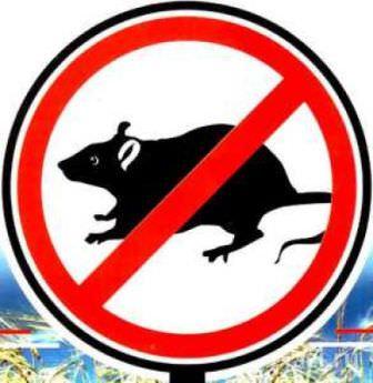 Борьба с мышами и крысами на дачном участке обязательно должна быть комплексной