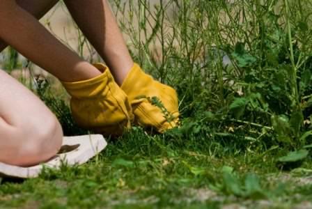 Используйте на даче только практичные методы уничтожения сорняков