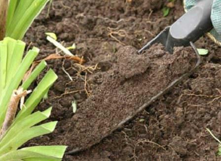 Использовать химические средства для борьбы с сорняками следует строго по инструкции