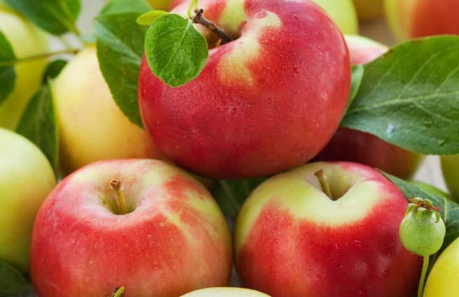 На сегодняшний день яблони сорта «Лигол» широко распространены при культивировании в коммерческих целях