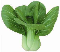 Капуста пак-чой – это одна из наиболее древних овощных культур