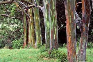 Растения с декоративной окраской коры – настоящая находка для тех, кто увлекается ландшафтным дизайном