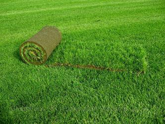 Насколько эффективен зеленый покупной газон