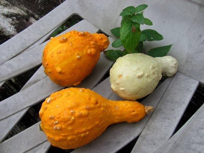 Плоды декоративных видов следует собрать ещё до наступления резко отрицательных температур