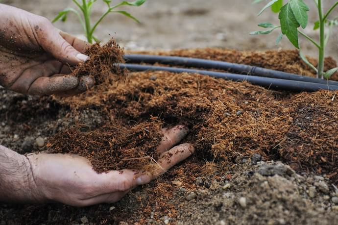 Использование органических удобрений также становится очень популярным, так как они не содержат химических веществ, обладающих сильными побочными эффектами