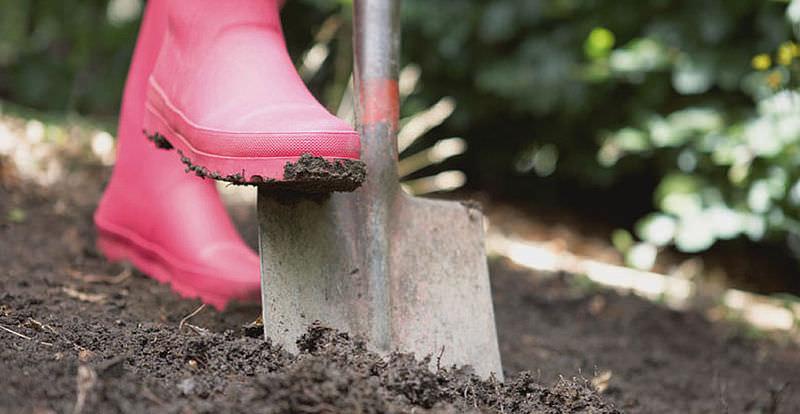 Ранней весной требуется провести глубокую перекопку почвы с одновременным удалением всей сорной растительности