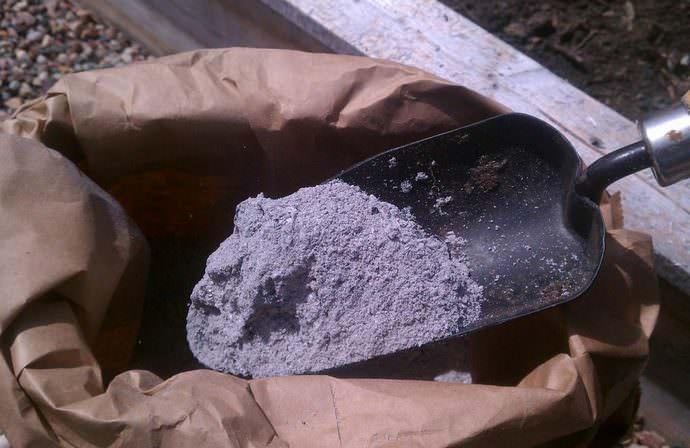 Важно периодически проводить опыливание надземной части и почвы древесной золой