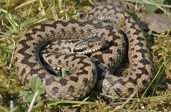 Как отпугнуть змей на даче
