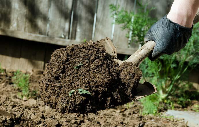 Для профилактики фузариоза необходима глубокая перекопка почвы с удалением всей сорной растительности