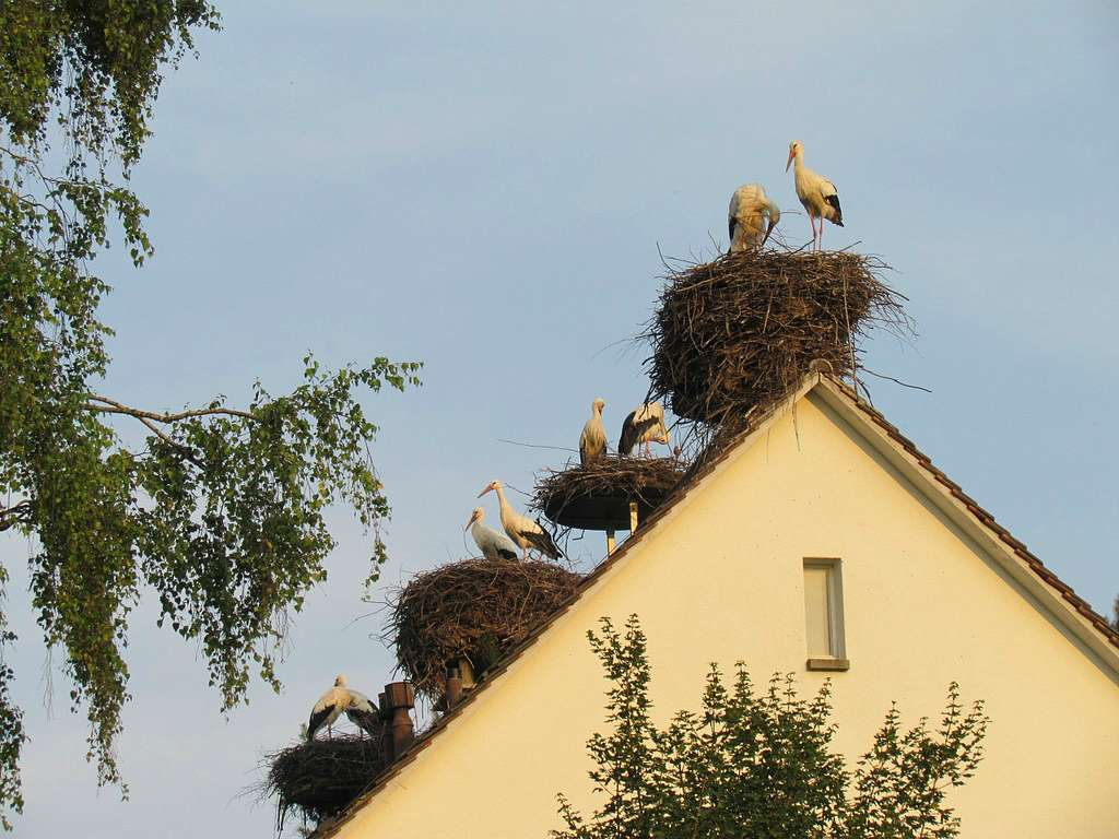 Гнездовья на крышах лучше всего делать на деревянной накладке