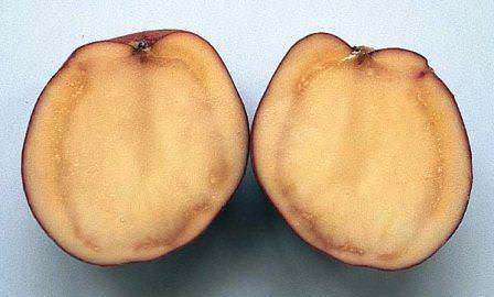 Болезни картофеля могут быть очень серьезными