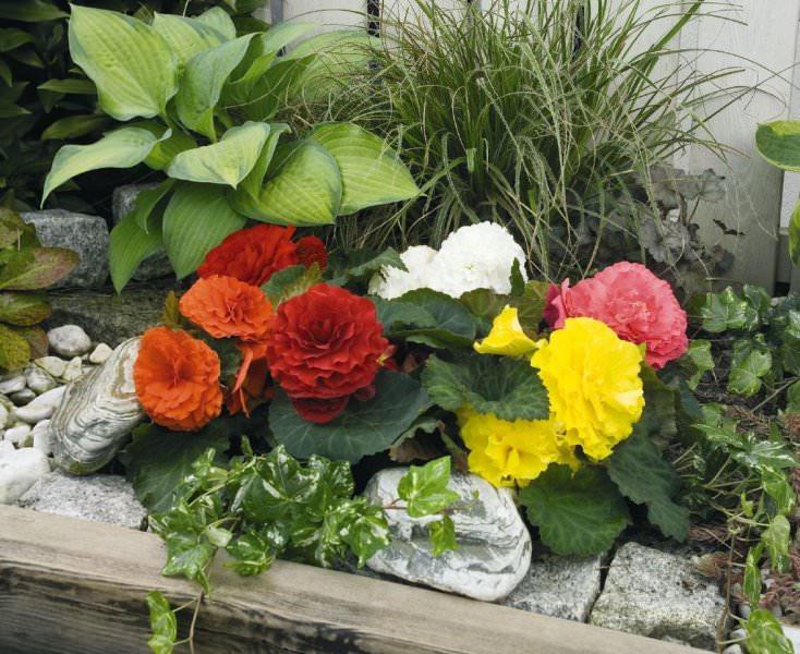 Неправильное хранение зимой отразится летом на плохом цветении