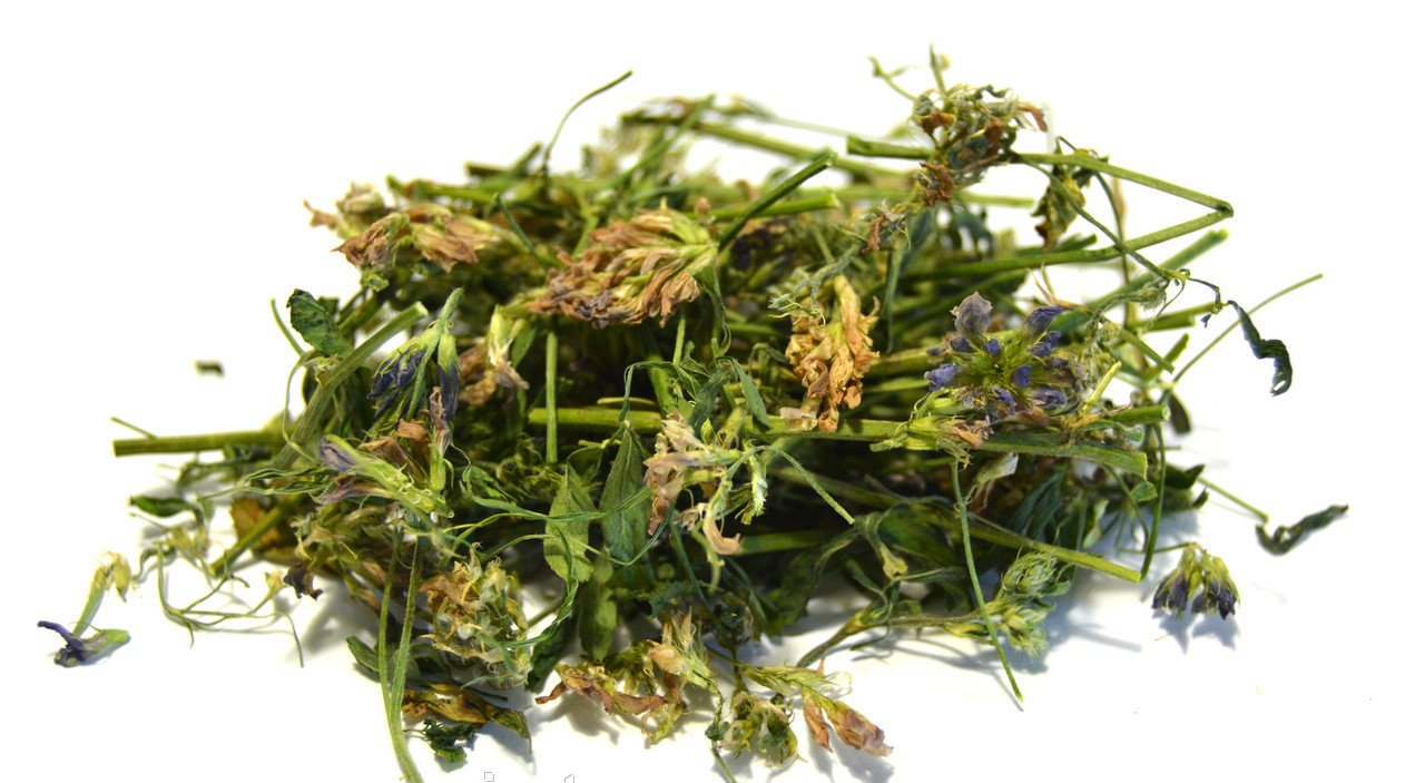 Люцерна отличается богатым питательным и целебным составом, благодаря чему используется во многих сферах