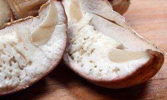 Можно ли есть червивые грибы - вопрос не праздный