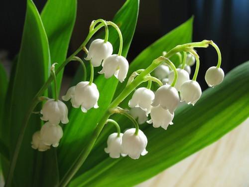 Цветы с сильным ароматом и красивым продолжительным цветением – настоящее украшение сада