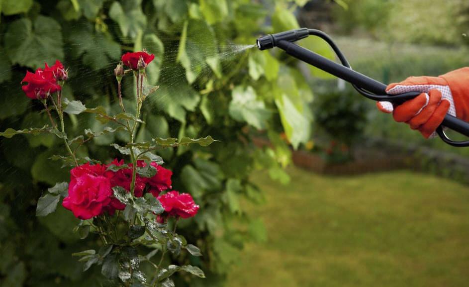Для защиты цветов от вредителей можно использовать инсектицидные препараты широкого спектра действия