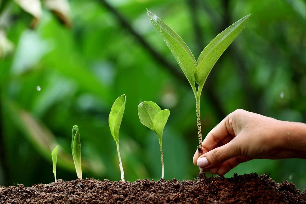 Поскольку черемша – это многолетнее растение, лучше сразу выбрать оптимальное место для посадки