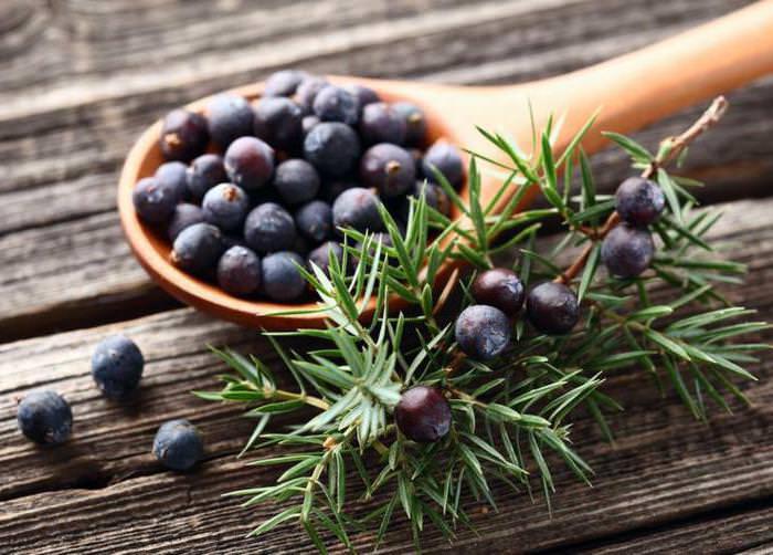 Сбор можжевеловых ягод лучше всего производить осенью, когда завершился период созревания