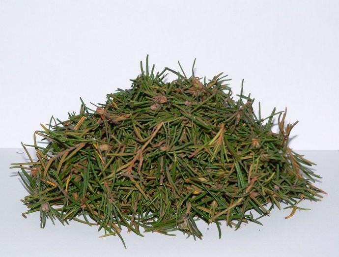 Правильно подготовленное растительное сырьё обладает характерным бальзамическим, выраженным, дурманящим ароматом и горьковато-пряным вкусом, напоминающим камфару