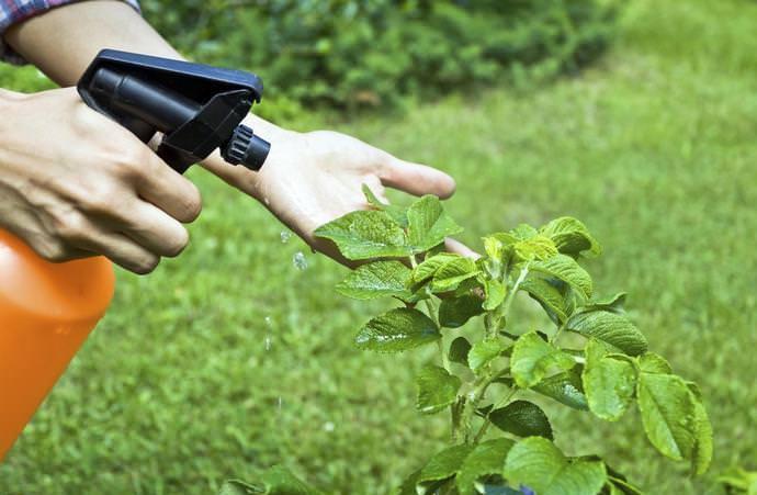 Состав раствора на основе Циркона позволяет выращиваемым растениям обрести повышенную устойчивость к факторам, провоцирующим поражение фузариозом, бактериозами, гнилями, мучнистой росой, фитофторой, паршой
