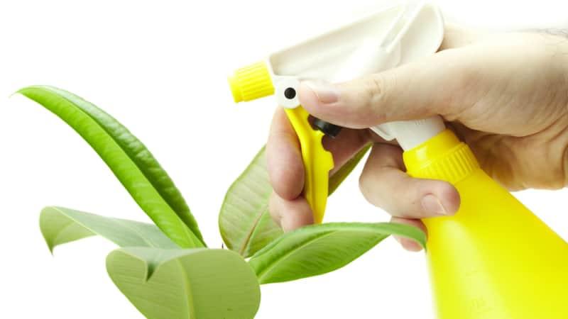 Обработанный цветок препаратом Циркон редко поражается патогенной микрофлорой или растительными паразитами