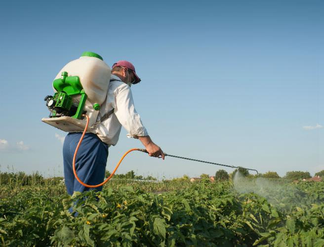 Картофельные посадки нужно опрыскать раствором Циркона после появления полных всходов, а также на стадии массовой бутонизации
