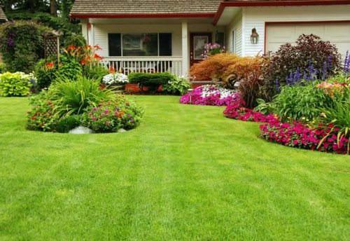 Выбираем декоративную траву для газона